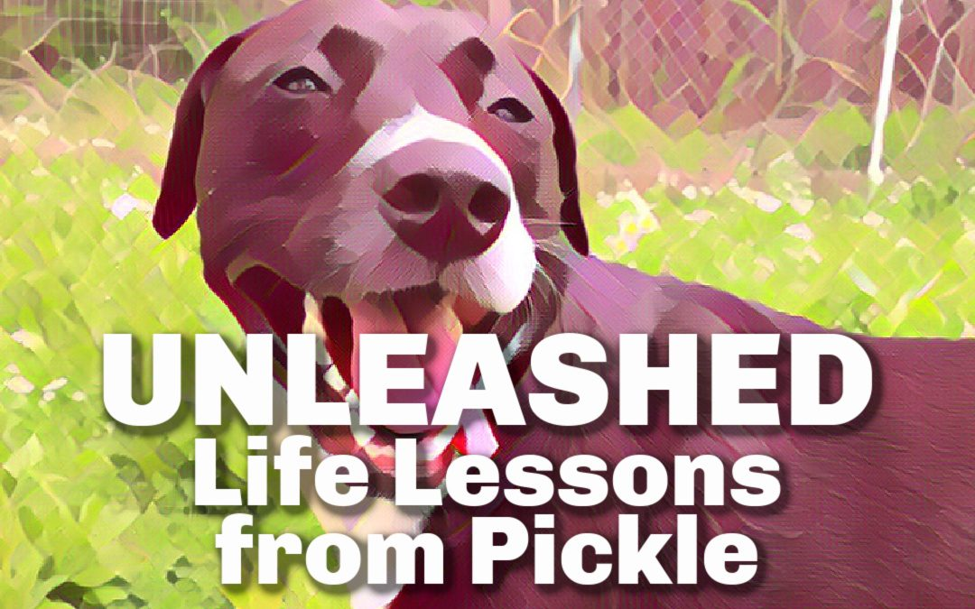 Unleashed: Life Lessons from a Dog